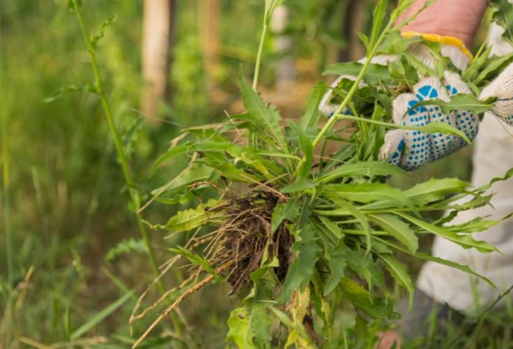WEED CONTROL & INSECTICIDES