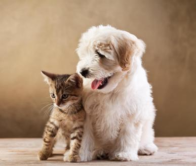 Everything you need to take care of your pets.