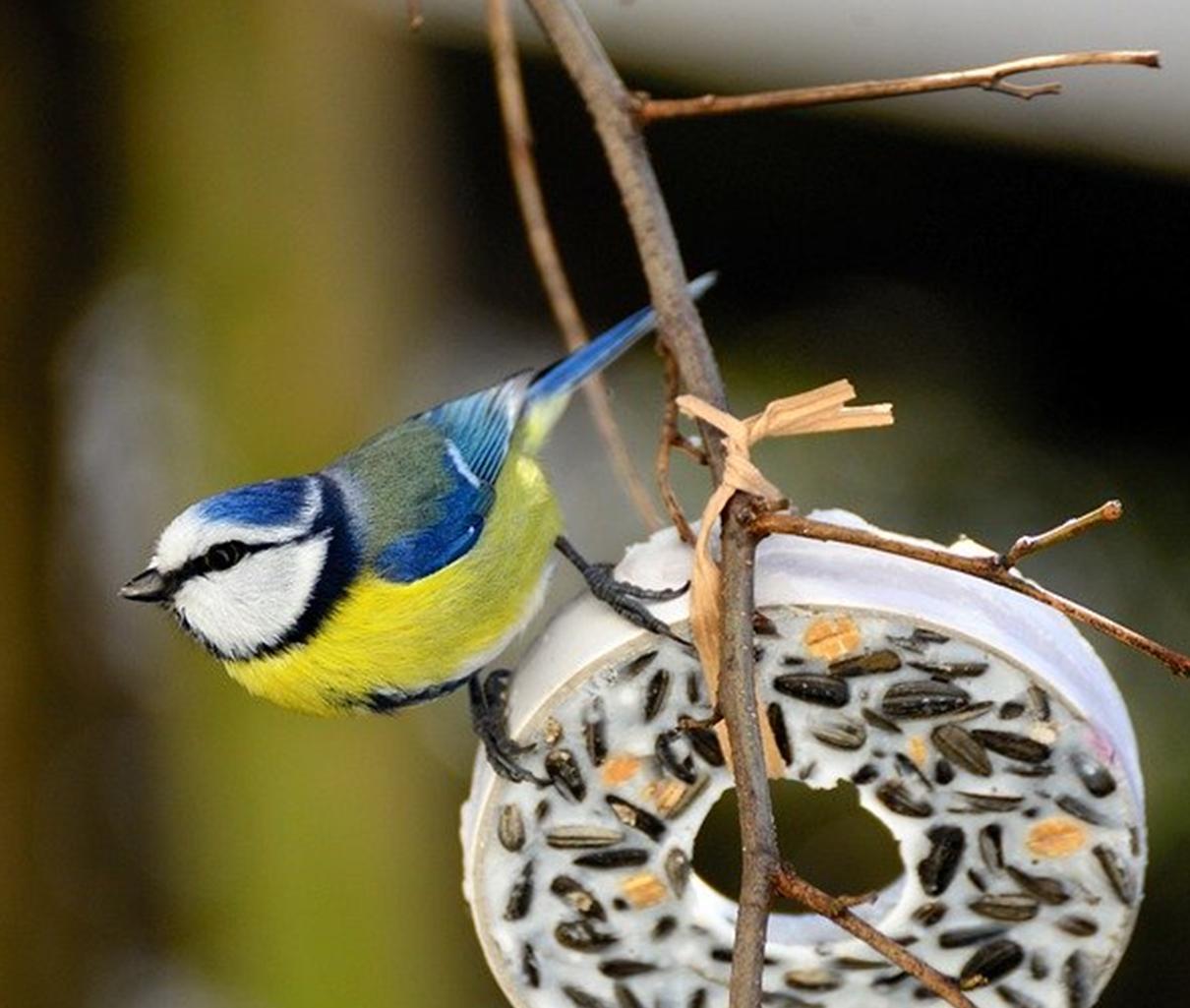 WILD BIRD CARE RANGE