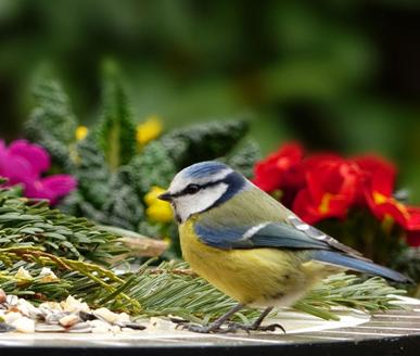WILD BIRD FOOD, FEEDERS AND CARE PRODUCTS