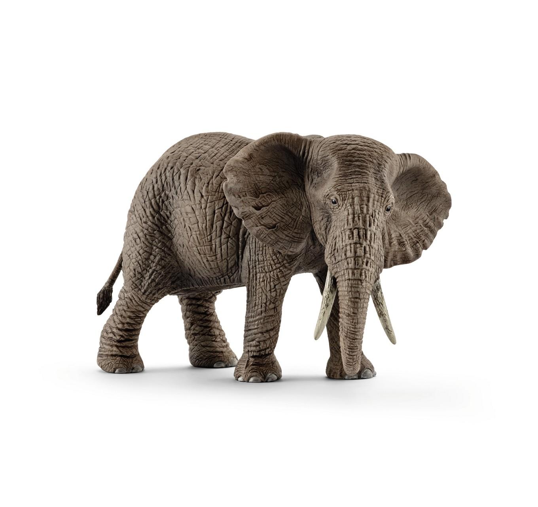 African Elephant, Female
