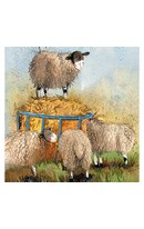 Card - Sheep & Hay