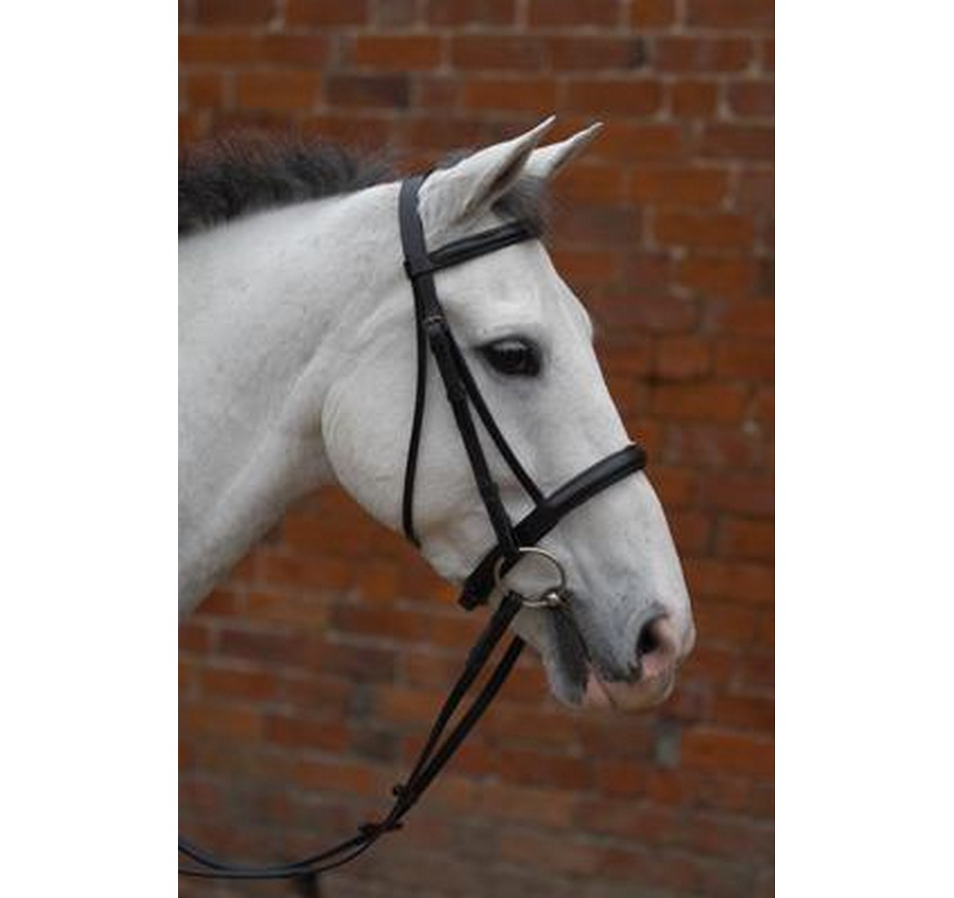 Cavesson Bridle Brown - Cob