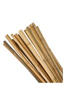 Bamboo Cane 4ft