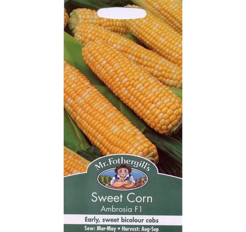 Sweet Corn Ambrosia F1