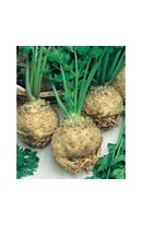 Celeriac Monarch