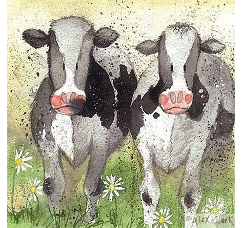 Curious Cows Blank card
