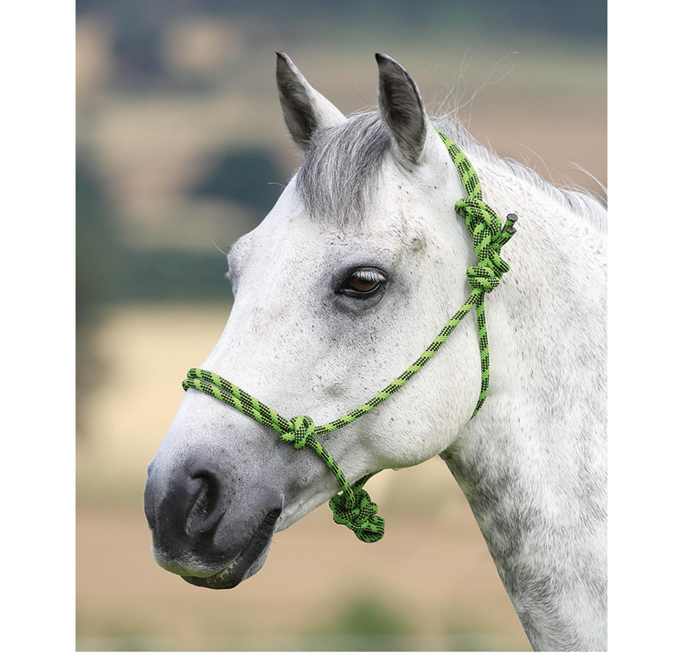 Control Rope Headcollar Lime