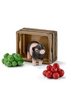 Mini Pig with Apples
