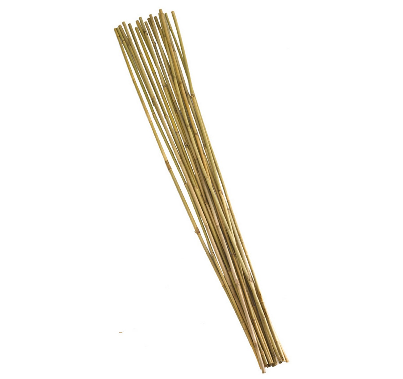 Bamboo Canes 210cm 10pk 7ft