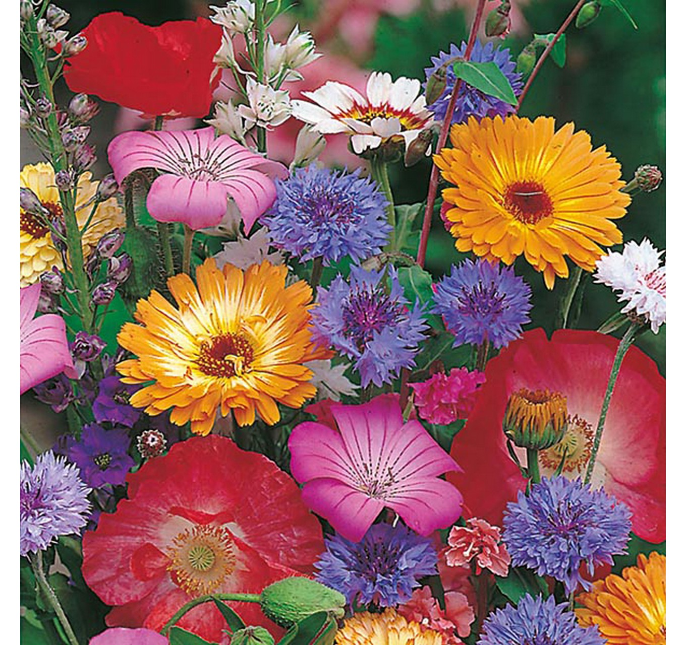 Mixed Annuals Quick & Easy