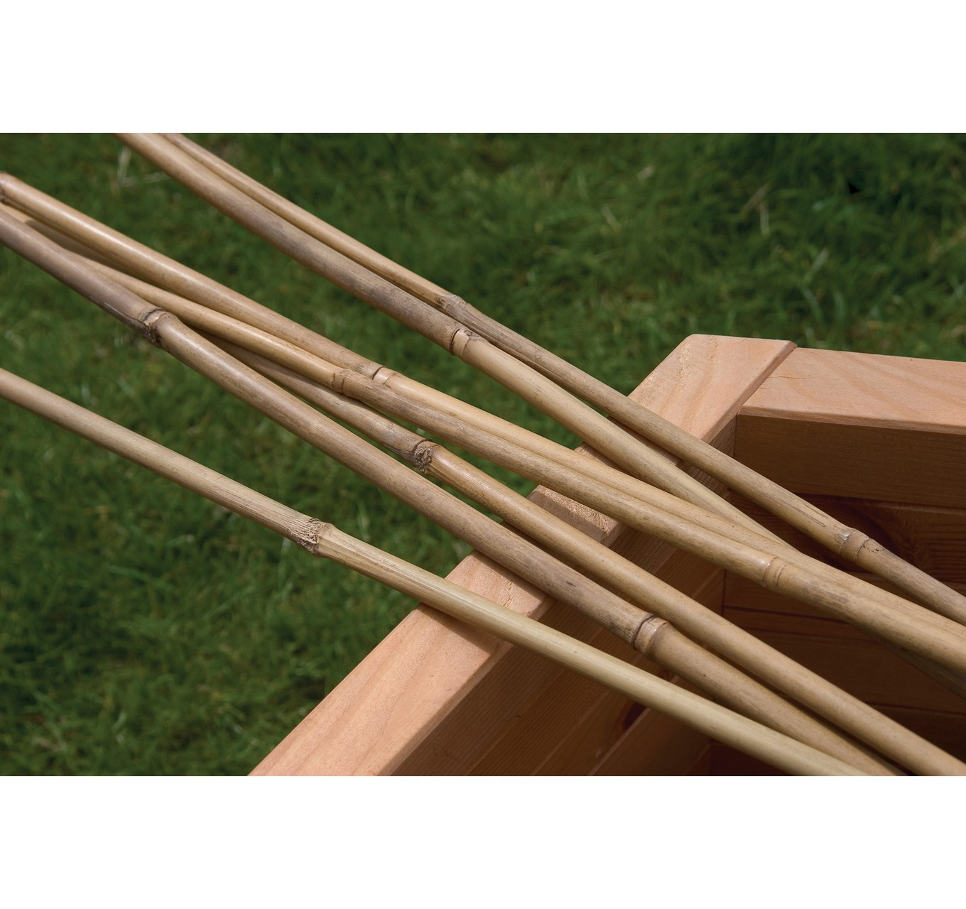 Bamboo Canes 8ft 10pk