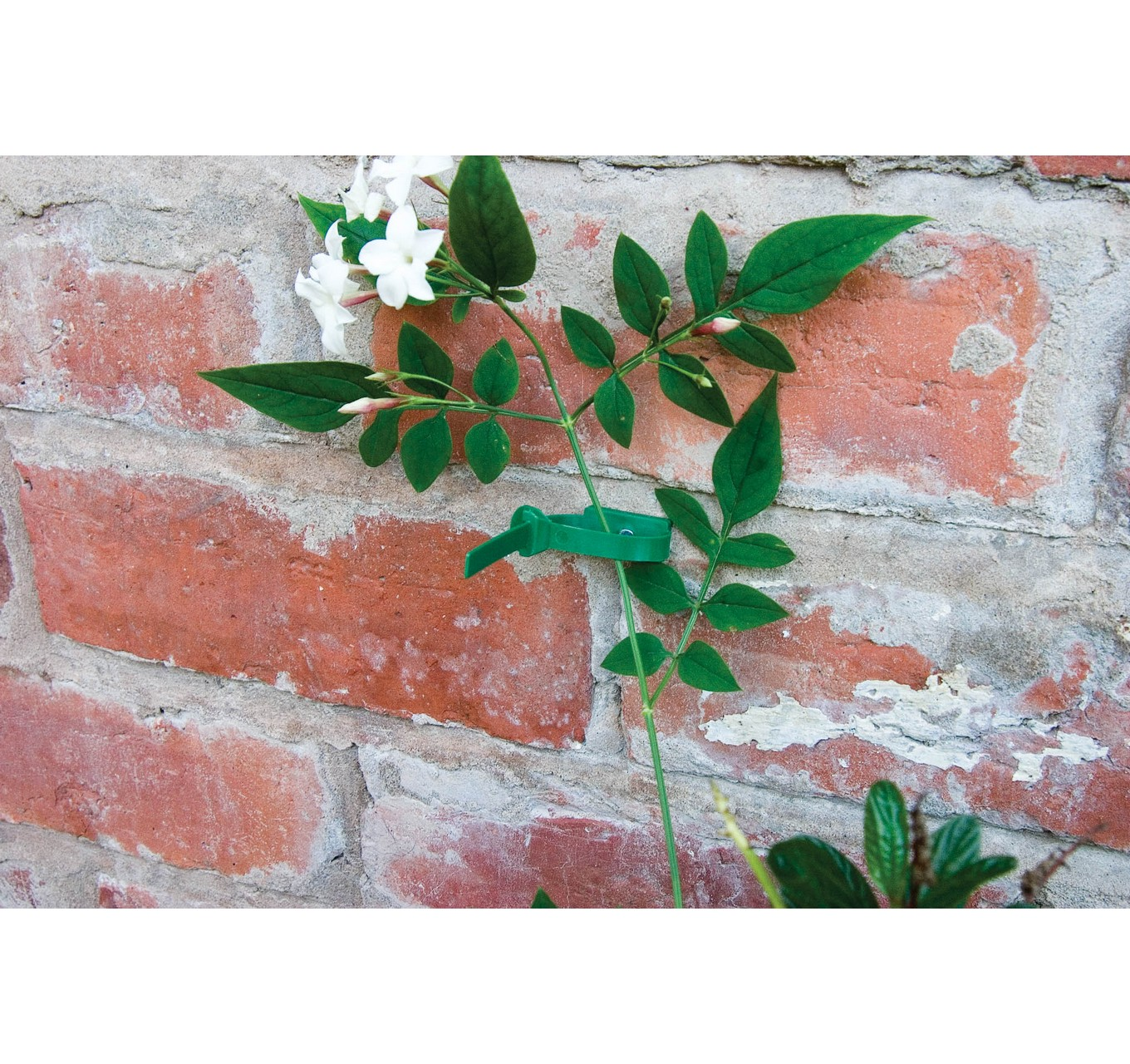 Plant to Wall Ties 10cm 8pk