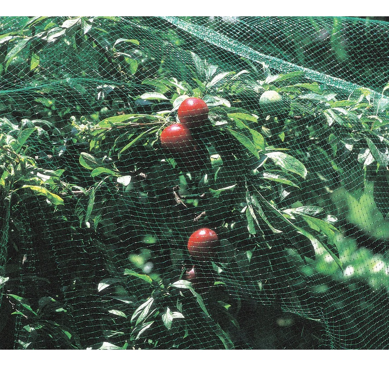 Plant Protection Net 4m x 2m